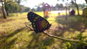 Blutterfly no campo imagem de stock