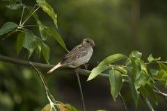 blyertspenna för fågelfilialteckning Fotografering för Bildbyråer
