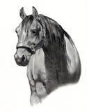 blyertspenna för häst för teckningshuvud Royaltyfria Bilder