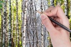Blyertspennaattraktioner gör bar björkar i vinterskog fotografering för bildbyråer