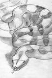 Blyertspennan för Boaconstrictoren skissar Arkivbilder
