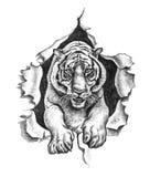 Blyertspennateckning av en tiger Arkivfoton