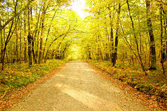 Blytak för en smutsbrandväg in i avståndet som omges av guling- och gräsplanhöstlövverk i en tät skog Royaltyfria Bilder