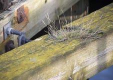 Blyth-Dock Stockfoto