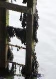 Blyth-Dock Lizenzfreie Stockbilder
