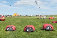 Blyth, Northumberland, UK: ΣΤΙΣ 4 ΜΑΐΟΥ 2015 Ικτίνοι κατά την πτήση σε Blyth Στοκ εικόνες με δικαίωμα ελεύθερης χρήσης