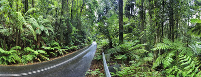 BM Irvine rainforest road. Bitimen remote road in the middle of evergreen wet rainforest in BLue Mountains of Australia. Mount Irvine road surrounded by fern Royalty Free Stock Photos