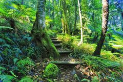 BM Irvine Rainforest steps. Evergreen lush rainforest plants casting shades on land tracks over hill sides in Mount Irvine of Australian Blue Mountains national Stock Image