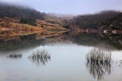 BM lyell krzaków Jeziorna woda zdjęcie royalty free