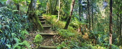BM Mt Irvine Creek steps. Steps of isolated tourist track down to cathedral creek of Mt Irvine in Blue Mountains, Australia. Green lush rainforest wet and humid Royalty Free Stock Image