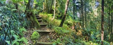 BM Mt Irvine Creek steps Royalty Free Stock Image