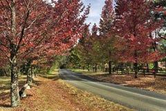 BM Mt Wilson road red trees Stock Photos