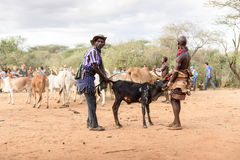 BMen που προετοιμάζει τους ταύρους για την πηδώντας τελετή ταύρων, Αιθιοπία Στοκ Φωτογραφίες