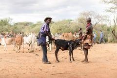 BMen som förbereder tjurar för tjurbanhoppningceremonin, Etiopien arkivfoton
