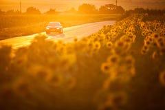 BMW M3 免版税库存图片