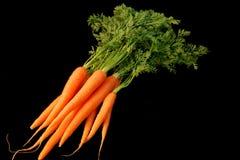 Bündel frische Karotten Lizenzfreies Stockbild