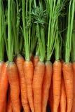 Bündel Karotten Lizenzfreie Stockbilder