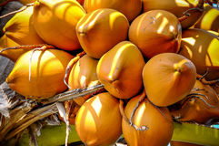 Bündel Kokosnüsse Lizenzfreies Stockfoto