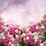 Bündel Rosen und Tulpenblumen Stockfoto