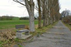 Bänk i gränden för poppelträd, Tjeckien, Europa Royaltyfria Bilder