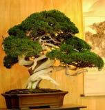 Bnosai树特写镜头有背景 免版税库存照片