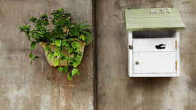 Boîte aux lettres et plantes vertes sur le mur de ciment Images libres de droits