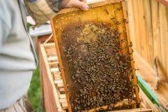 Boîte avec des abeilles et couverte de la cire et de miel images libres de droits