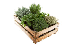Boîte avec des herbes Photographie stock