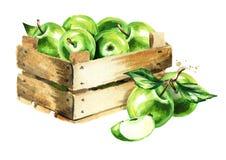 Boîte avec les pommes vertes Illustration tirée par la main d'aquarelle, d'isolement sur le fond blanc Photos libres de droits