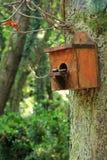 Boîte d'écureuil Image libre de droits