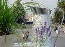 Boîte d'arrosage en métal pour arroser parmi différentes fleurs et plantes image stock