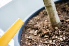 Boîte d'arrosage jaune avec le pot sec de tonne Photographie stock libre de droits
