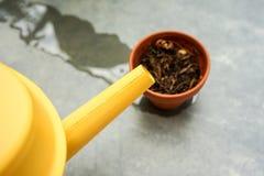 Boîte d'arrosage jaune avec le pot sec de tonne Photographie stock