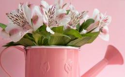 Boîte d'arrosage rose avec des fleurs, boîte d'arrosage avec l'alstromeria, un bouquet des fleurs dans une boîte d'arrosage sur u photo stock