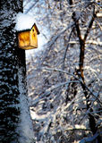 Boîte d'oiseau au soleil sur l'arbre couvert de neige Photo stock