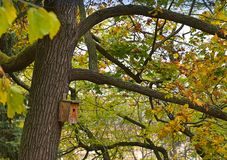 Boîte d'oiseau en bois dans un arbre Image libre de droits