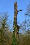 Boîte d'oiseau sur un tronc d'arbre Photographie stock libre de droits