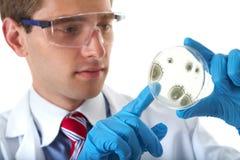 Boîte de Pétri de contrôle d'aide de laboratoire avec la bactérie Images libres de droits