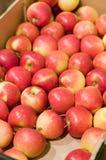 Boîte de Papper contenant les pommes rouges Photo libre de droits