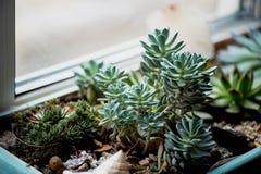 Boîte de succulents sur le rebord de fenêtre comme décoration image libre de droits