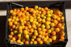 Boîte de tomates jaunes Images stock