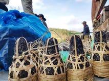 Boîte en bambou pendant 400 années de secteur de thé de province de Phongsali, Laos Images stock