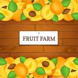 Boîte en bois avec des fruits d'abricot Illustration de carte de vecteur Images stock