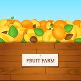 Boîte en bois avec des fruits d'abricot Illustration de carte de vecteur Photo stock