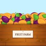 Boîte en bois avec des fruits de prune Illustration de carte de vecteur Embarque le fond en bois, la frontière avec des prunes po Photographie stock libre de droits