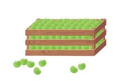 Boîte en bois avec les pommes vertes Photos libres de droits