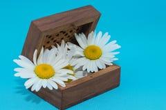 Boîte en bois d'isolement de photo dans le style de vintage avec deux couleurs des marguerites sur le fond bleu photographie stock libre de droits