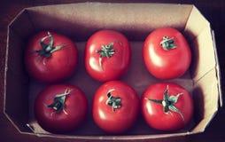 Boîte en carton avec six tomates-cerises photographie stock libre de droits