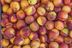 Boîte remplie de nectarines fraîches Image stock