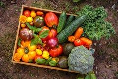 Boîte végétale organique avec tomates-cerises de grandes, basilic, concombres, oignons rouges, brocoli et avocat Photo stock